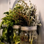 Fresh Herbs in the fridge