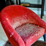 Pet Hair on your Furniture - Removing Pet Hair - PetDoors.com