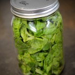 Store Lettuce in Jars