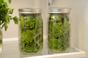 Storing lettuce in mason jars