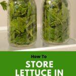 how to store lettuce in the fridge
