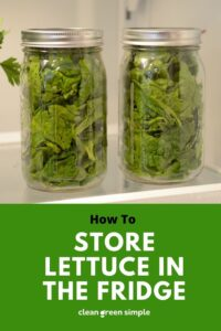 how to store lettuce in the fridge