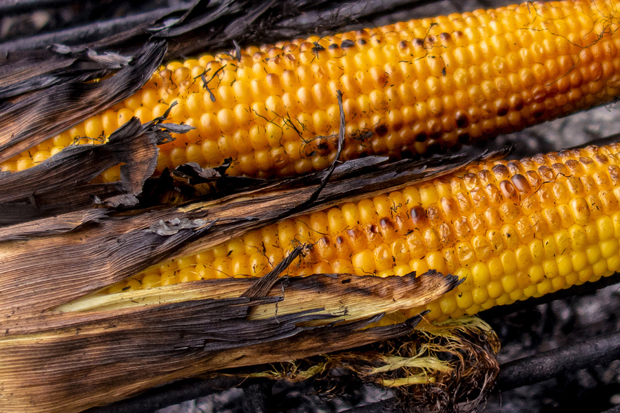 Campfire corn on the cob