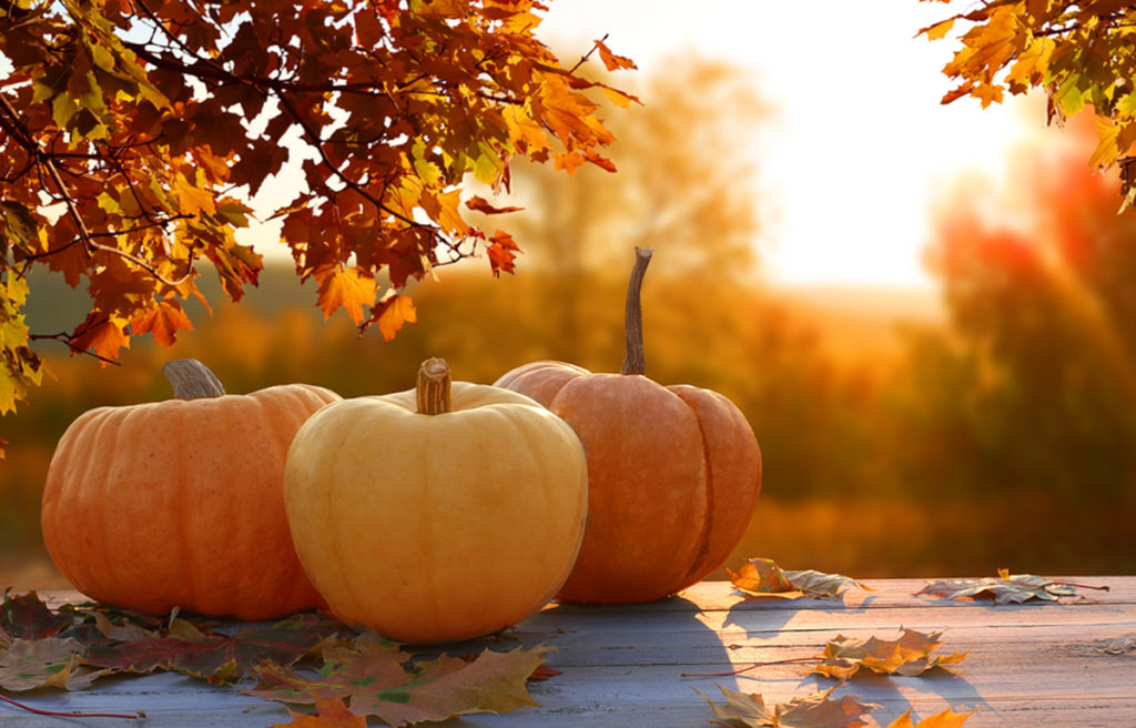 Pumpkins on a table in the sunset will fall leaves