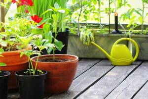 Vegetables in Pots
