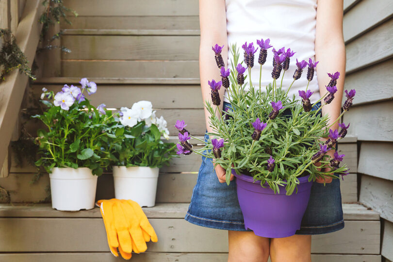 Girl holding lavender planted in a pot