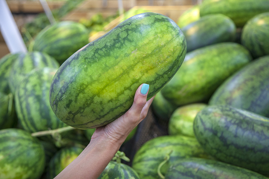 Choosing a watermelon in the grocery story