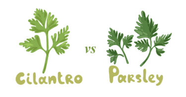 Cilantro vs. Parsley