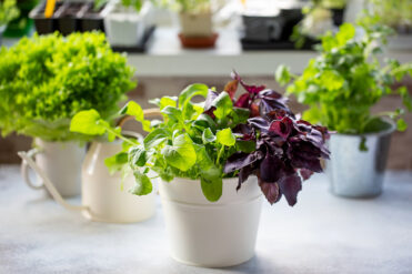 How to Grow Fresh Herbs Indoors in 5 Easy Steps