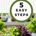 How to grow fresh herbs indoors