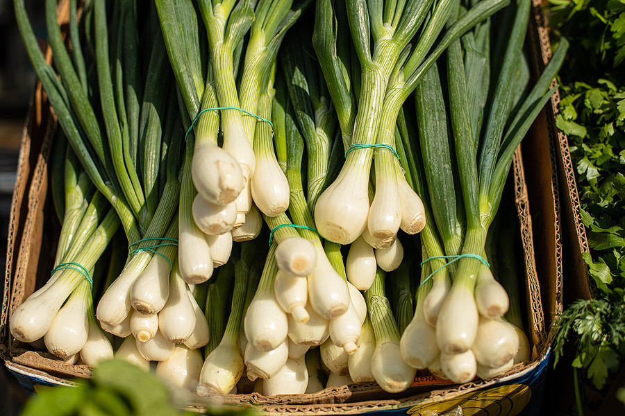 Bunches of spring onions in a cardboard box
