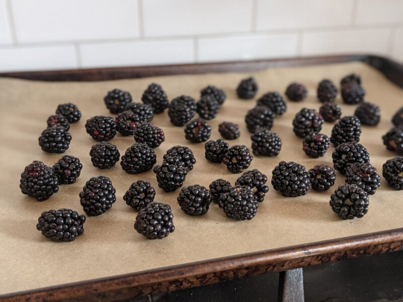 Dry blackberries spread out on a parchment-lined cookie sheet