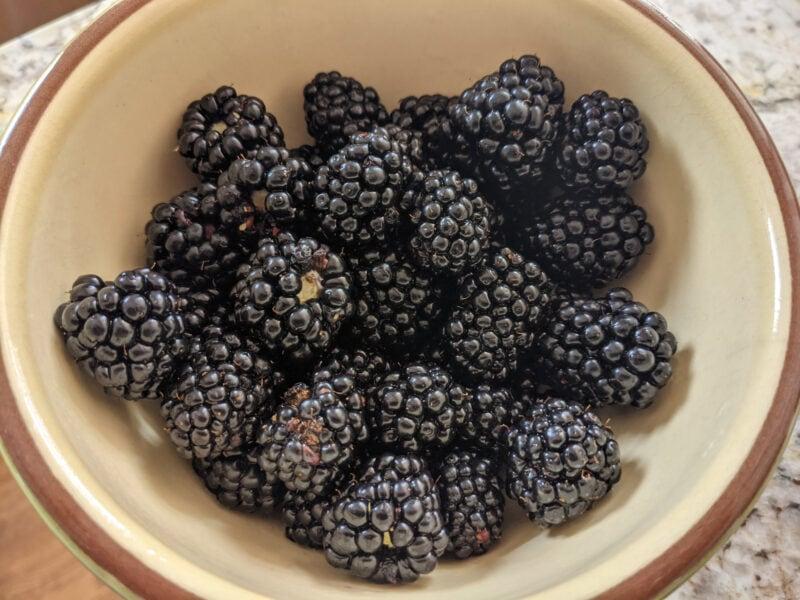 Fresh organic blackberries in a bowl