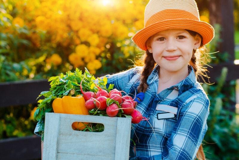 Kids little girl holding basket fresh organic vegetables background home garden sunset. Healthy family lifestyle. Harvest time in autumn. child the farmer. Vegetarian, raw food.