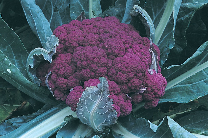 Graffiti Cauliflower
