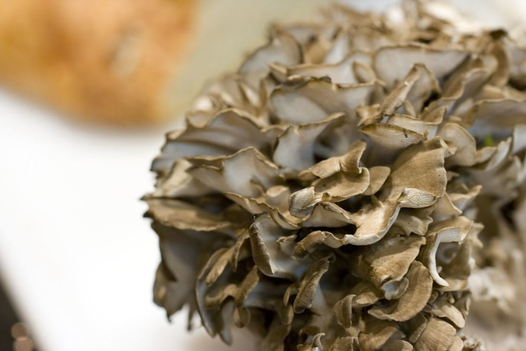 Maitake Mushrooms (Grifola frondosa)