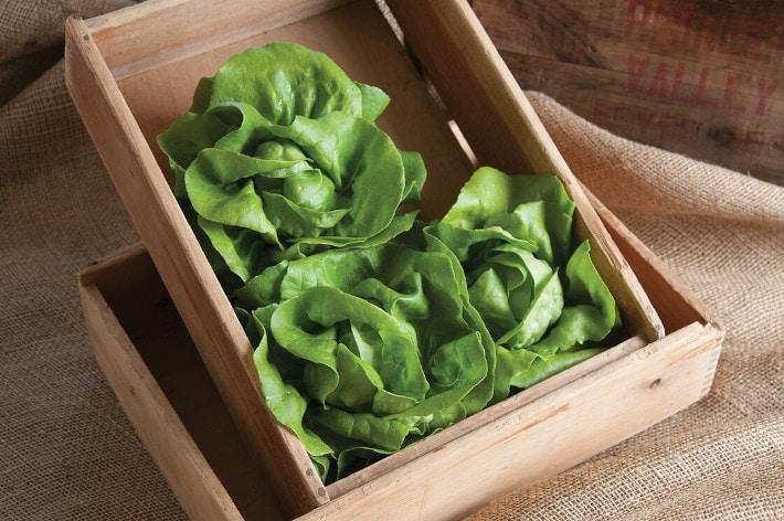 Rex Boston Lettuce in wooden bins on burlap
