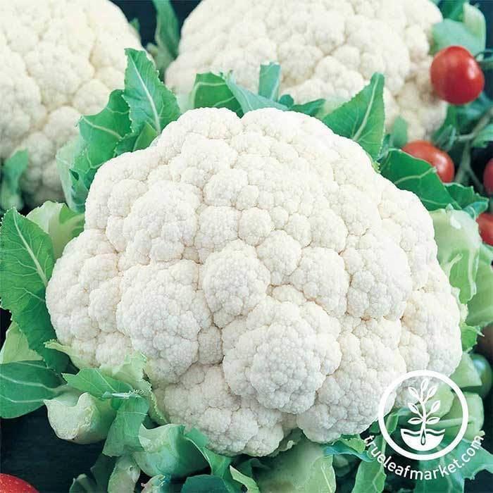 Showball Y Improved Cauliflower