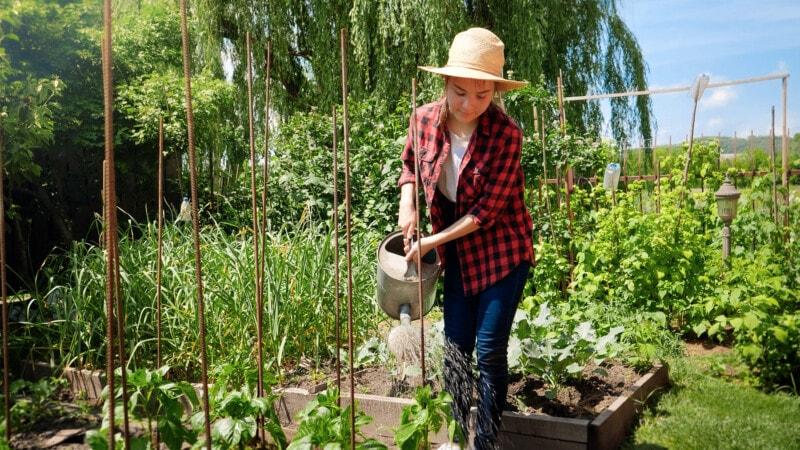 Woman watering fall garden